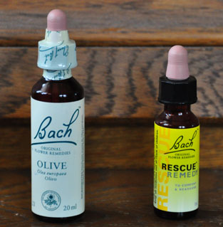 bach_olive